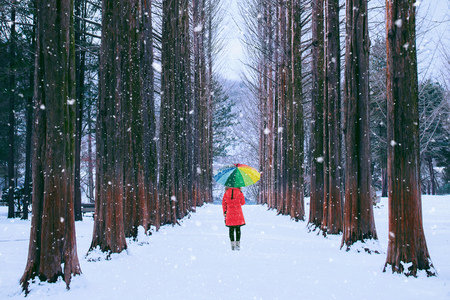 Photo for Girl with colourful umbrella in row tree, Nami island in South Korea. Winter in South Korea. - Royalty Free Image