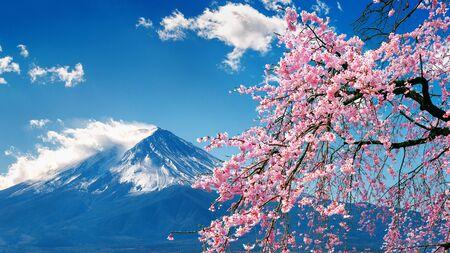 Foto de Fuji mountain and cherry blossoms in spring, Japan. - Imagen libre de derechos