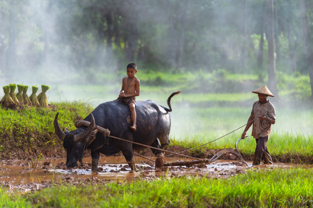 Foto für Asian farmer working with his buffalo, farmer thailand. - Lizenzfreies Bild