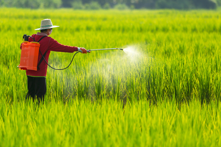 Foto für Asian farmer peasantry spraying pesticides in rice fields - Lizenzfreies Bild