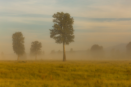 Photo for Alone tree on meadow morning seen, natural landscape background - Royalty Free Image