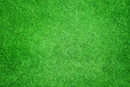 Photo pour Beautiful green grass texture - image libre de droit