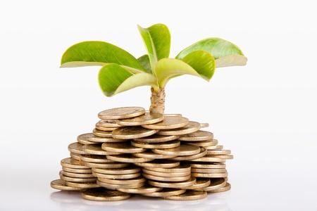 Foto de Pile of money  indian coin   isolated on white background under tree or plant - Imagen libre de derechos