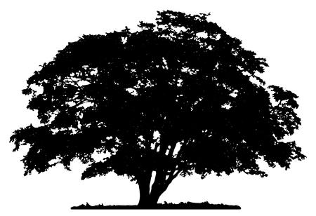 Ilustración de Tree silhouette on white background - Imagen libre de derechos