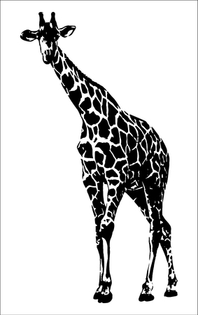 Illustration pour Giraffe vector graphics on white background illustration. - image libre de droit