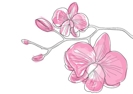 Illustration for Vector illustration of pink orchid flowers - Royalty Free Image