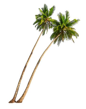 Photo pour Coconut palm trees isolated on a white  - image libre de droit