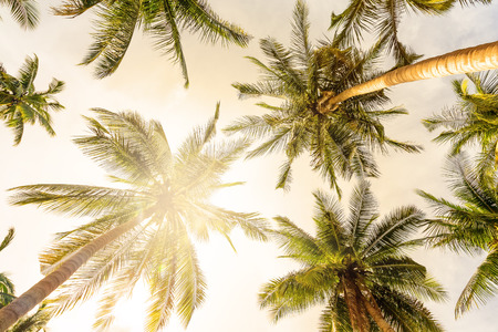Photo for Coconut palm trees perspective view - Royalty Free Image