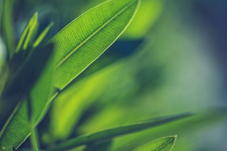 Photo pour Green fresh plants grass closeup for background - image libre de droit