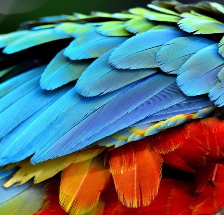 Photo pour Close up of Parrot and Macaw bird feathers - image libre de droit