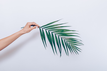 Photo pour Female hand with white manicure holds a branch of a palm tree on a white background - image libre de droit