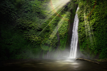 Photo for Waterfall in the tropical forest. Munduk, Bali, Indonesia. - Royalty Free Image