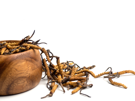 Foto de Close up Cordycep sinensis (CHONG CAO) or mushroom cordyceps on Wooden bowl on isolated background. Medicinal properties in the treatment of diseases. National organic medicine. - Imagen libre de derechos