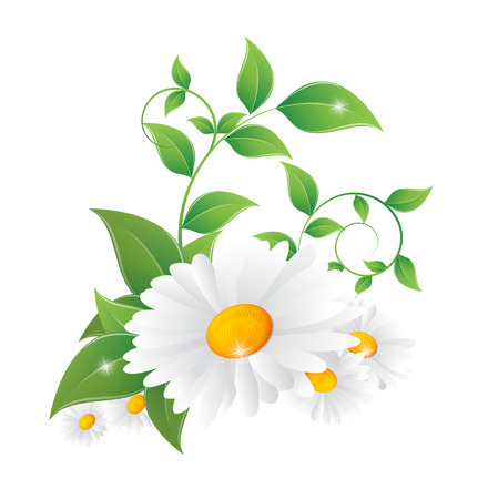 Illustration pour daisy with green leaves on a white background - image libre de droit
