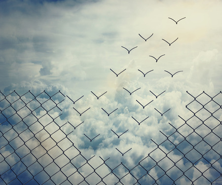 Foto de Metallic wire mesh transform into flying birds over the sky - Imagen libre de derechos