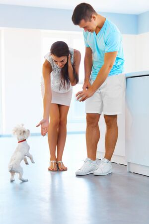 Puppy tricks. Happy family couple having fun  with a dog in the kitchen at home.