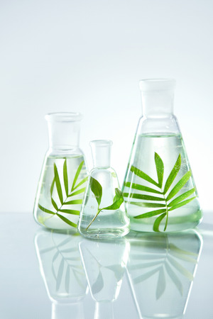 Foto de Laboratory Glass With Plant In Water. Close Up Of Transparent Flask With Green Leaf And Liquid In It On Table In Chemical Lab. Laboratory Equipment. High Quality Image. - Imagen libre de derechos