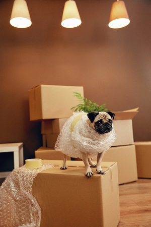 Photo for Moving House. Funny Dog On Carton Box In Room. High Resolution. - Royalty Free Image
