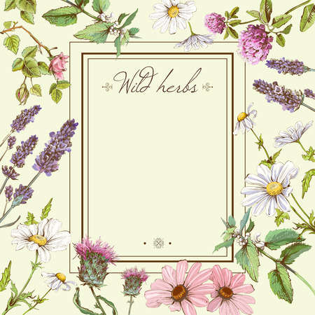 Illustration for Vector vintage colorful hand-drawn frame template illustration with wild flowers and herbs. Layout, mock up design for cosmetics, store, beauty salon, natural and organic - Royalty Free Image