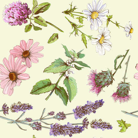 Illustration pour Vector vintage seamless pattern with wild flowers and herbs. Background design for cosmetics, store, beauty salon, natural and organic products. - image libre de droit