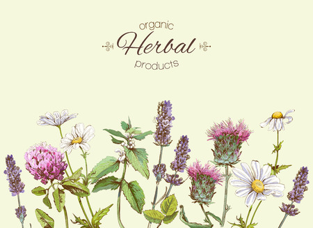 Illustration pour vintage banner with wild flowers and medicinal herbs. Design for cosmetics, store, beauty salon, natural and organic, health care products.Can be used like a greeting card.With place for text - image libre de droit