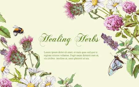 Illustration pour Vector wild flowers and herbs horizontal banner. Design for herbal tea, natural cosmetics, honey, health care products, homeopathy, aromatherapy. With place for text - image libre de droit