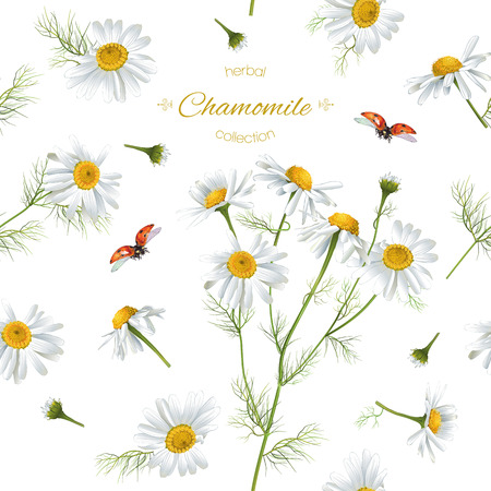 Illustration pour Vector chamomile flower seamless pattern with ladybug. Background design for herbal tea, natural cosmetics, health care products, aromatherapy, homeopathy. Best for print, wrapping paper - image libre de droit