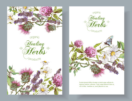 Ilustración de Vector vertical wild flowers and herbs banners. Design for herbal tea, natural cosmetics, honey, health care products, homeopathy, aromatherapy. With place for text - Imagen libre de derechos