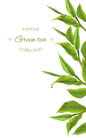 Ilustración de green tea with tea leaves and drops on white. Background design for packaging, tea shop, drink menu, homeopathy and health care products. - Imagen libre de derechos
