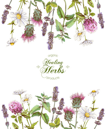 Illustration pour Vector herbal frame - image libre de droit