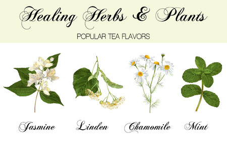 Illustration pour Healing plants set - image libre de droit