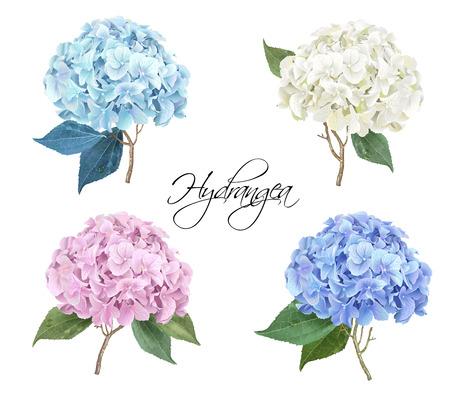 Illustration for Hydrangea realistic illustration set - Royalty Free Image