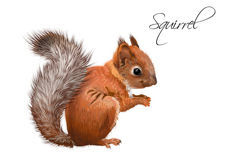Illustration pour Squirrel realistic illustration - image libre de droit