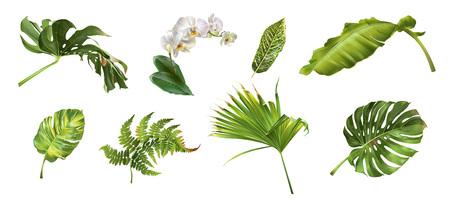 Illustration for Tropical plants set - Royalty Free Image