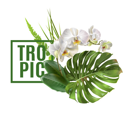 Illustration for Tropic plants banner - Royalty Free Image
