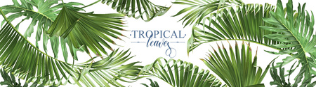 Illustration pour Tropical leaves web banner - image libre de droit