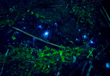 Photo for Amazing waitomo Glow worm in Caves, located in New Zealand - Royalty Free Image