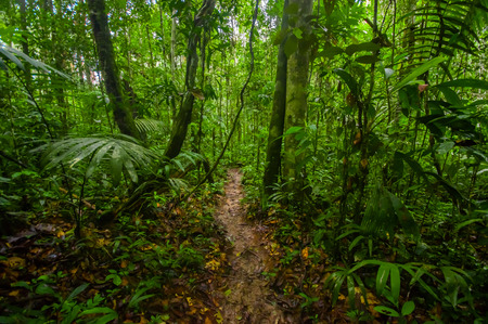Photo pour Inside of the amazonian Jungle, surrounding of dense vegetation in the Cuyabeno National Park, South America Ecuador - image libre de droit