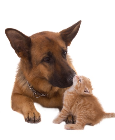 dog and his friend cat