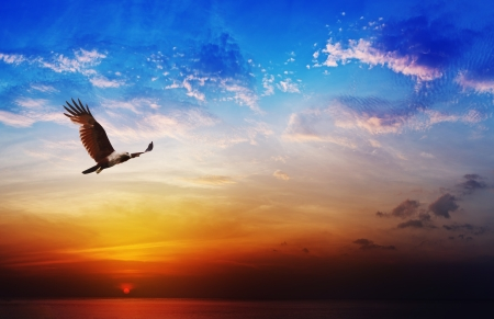 Photo pour Bird of prey - Brahminy Kite flight on beautiful sunset above the sea background - image libre de droit