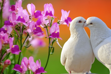 Photo for two loving white doves and butterfly orchid flower - Royalty Free Image