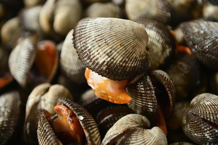 Photo pour Shellfish Marine animals - image libre de droit