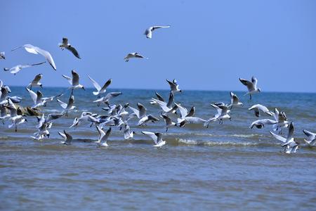 Photo pour Seagulls fly in free - image libre de droit