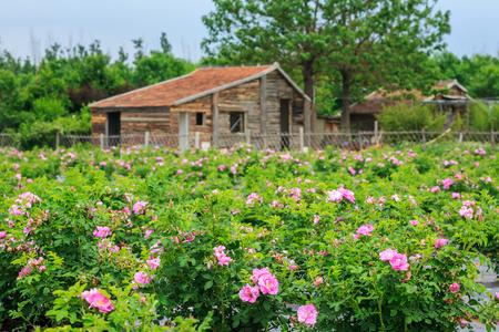 Foto de The landscape of the Rose Garden - Imagen libre de derechos