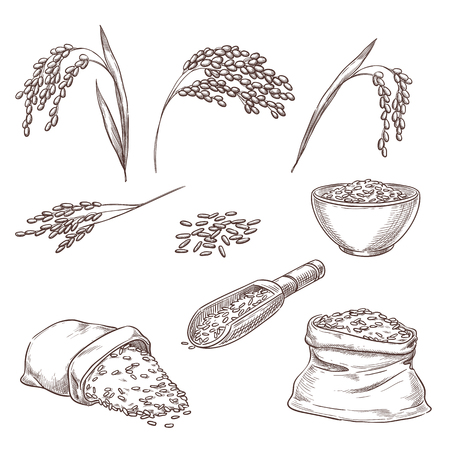Illustrazione per Rice cereal spikelets, grain in sack and porridge in bowl. Vector sketch illustration. Hand drawn isolated design elements. - Immagini Royalty Free