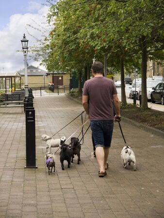 One Man and six dogs in the Spa Town of Ilkley in West Yorkshire England