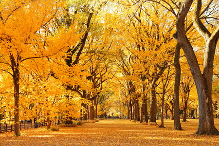 Photo for Central Park Autumn in midtown Manhattan New York City - Royalty Free Image