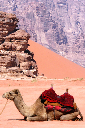 Two camels in Wadi Rum.