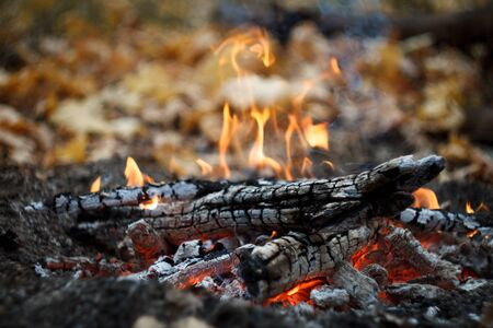 Photo for Close up of a burning bonfire in the forest, firewood and embers on fire in the autumn forest, selective focus - Royalty Free Image