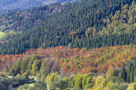 Photo for Autumn in the forests of the Basque country - Royalty Free Image